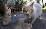 Умер старейший двумордый кот