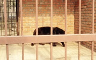 В Харьковской области на женщину напал ягуар