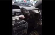 Пользователей сети повеселило видео щенка, играющего с кондиционером