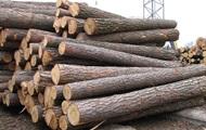 ЕС опять требует от Киева снять запрет на вывоз леса