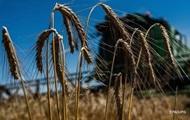 Украина продала рекордный объем пшеницы в Индию