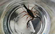 В Беларуси при покупке бананов мужчину ужалил скорпион