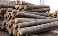 В ЕС против запрета на экспорт леса-кругляка