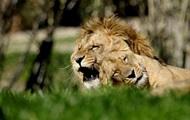 В ЮАР львы устроили пиршество посреди дороги
