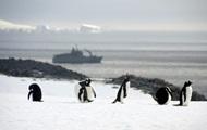 Ученые спустя 22 года работ выяснили, что едят пингвины