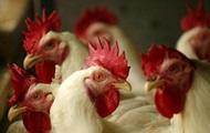 ЕС и Азия приостановили импорт птицы из Украины