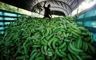 В Испании нашли 17 кг кокаина в резиновых бананах