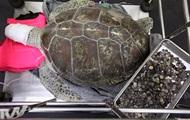 В Таиланде умерла съевшая 915 монет черепаха