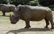 Во французском зоопарке браконьеры убили носорога