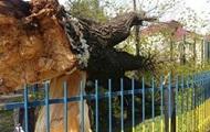 В школе Винницы упало дерево, есть пострадавшие