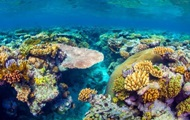 Эксперты назвали стоимость Большого Барьерного рифа