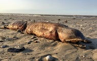 На пляже в Техасе нашли загадочное животное