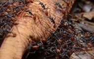 Ученые: 40% муравьев-рабочих ничего не делают