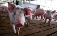 Беларусь отказалась от украинской свинины