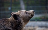 Фото отдыхающего на мусорной свалке медведя стало Хитом