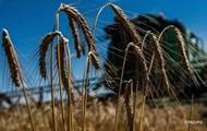 Кабмин: Урожай зерновых будет меньше прошлогоднего
